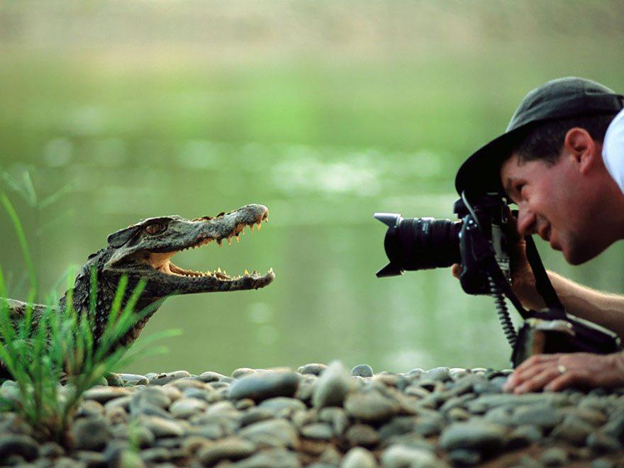 aligator-smiling-at-camera