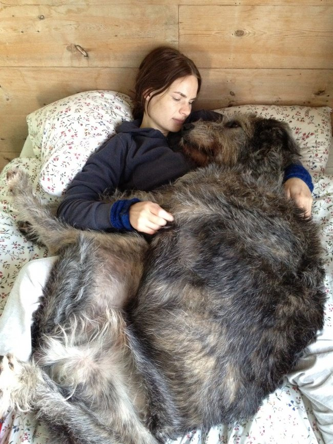 big-dog-4