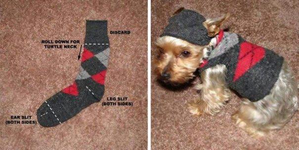 Creative-dog-owners-45-57bc54184042b__605