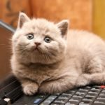 cat-wants-to-tell-you-laptop