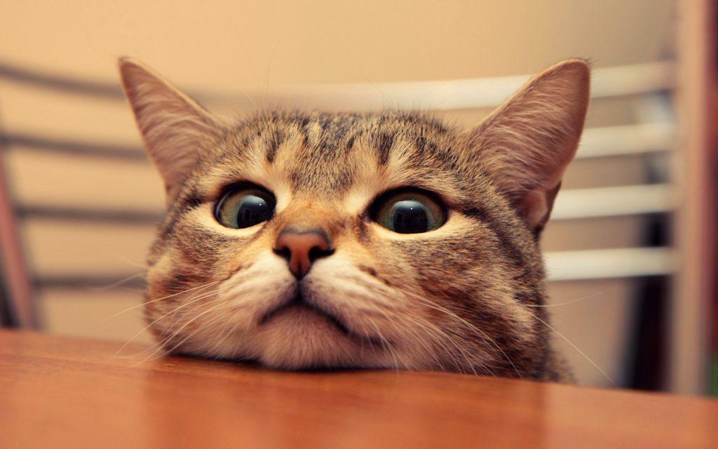 cute-cat-funny