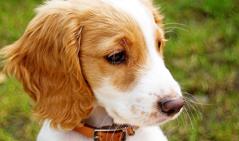the-best-dog-breeds