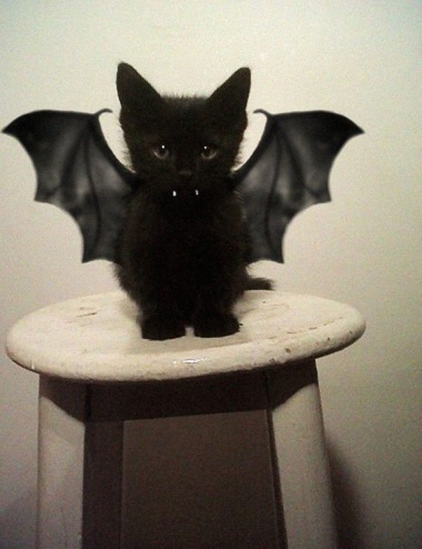 1-adorable-animals-ready-for-halloween