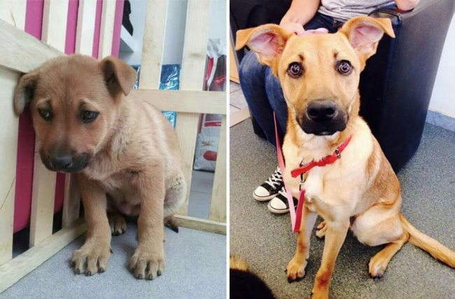 1-animals-before-after-saved-from-shelters
