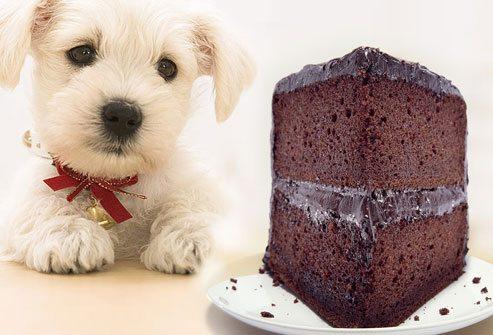 dog-eating-chocolate