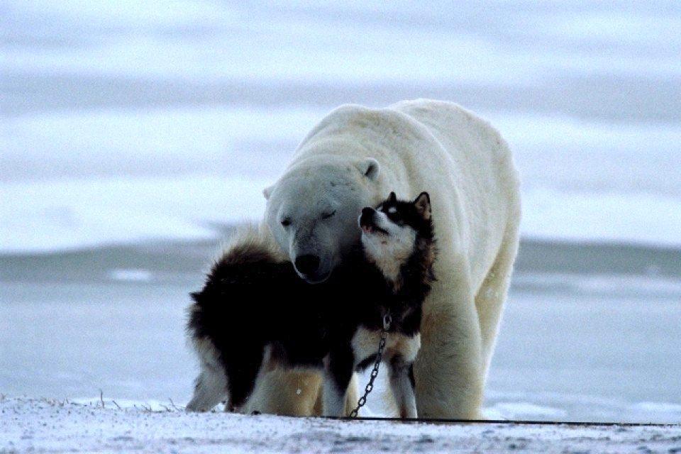 polar_bear_dog_friendship_3