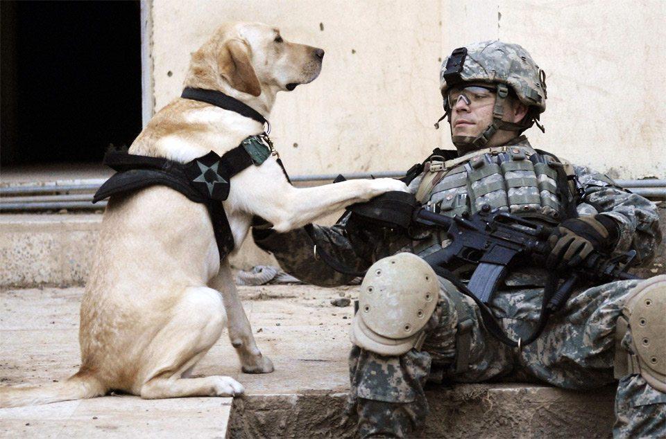 dog-owner-loyal-soldier