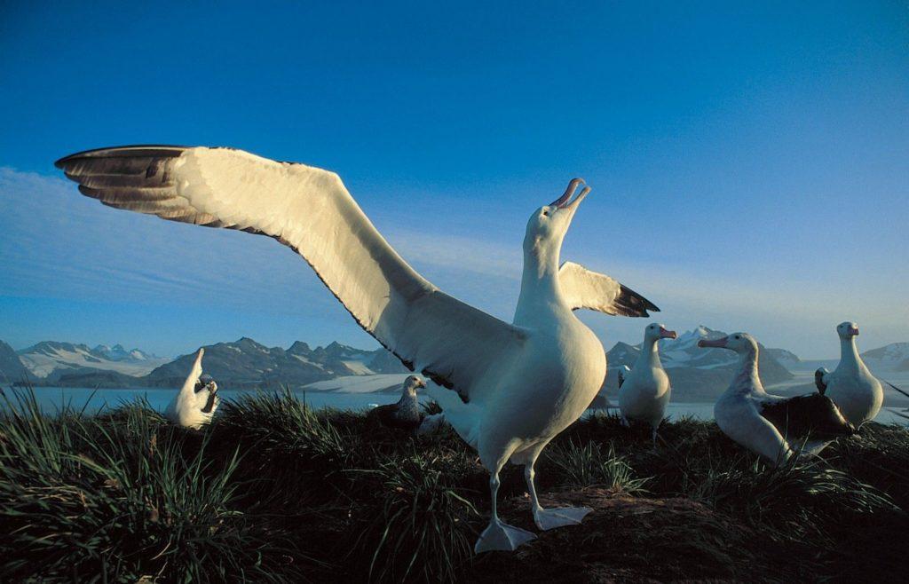 largest-living-birds-1
