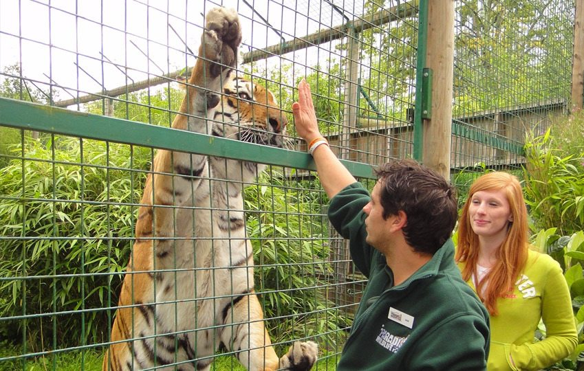 Paradise Wildlife Park is Europe's leading zoo for Wild Animal Experiences