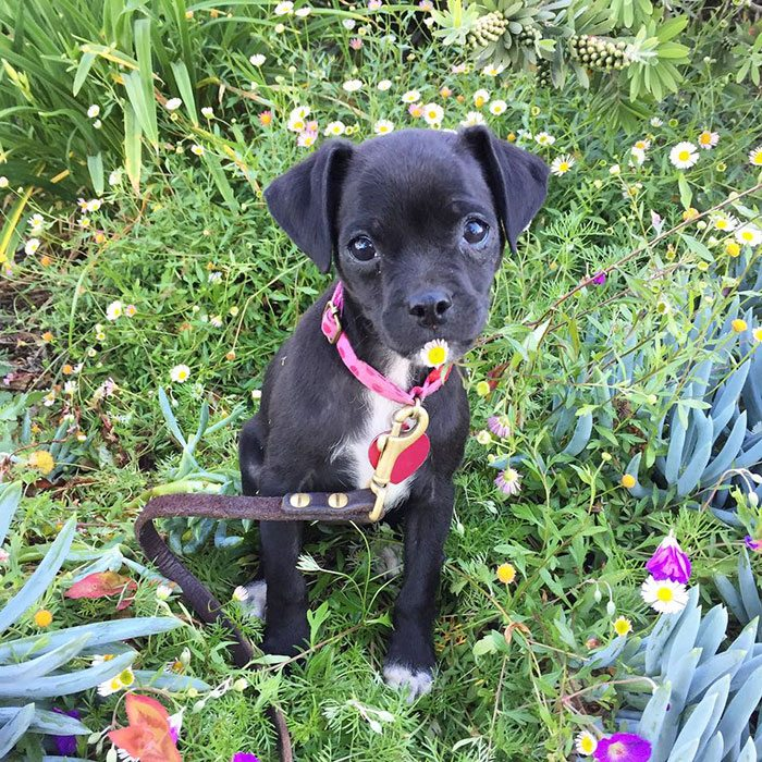 adopted-puppy-1