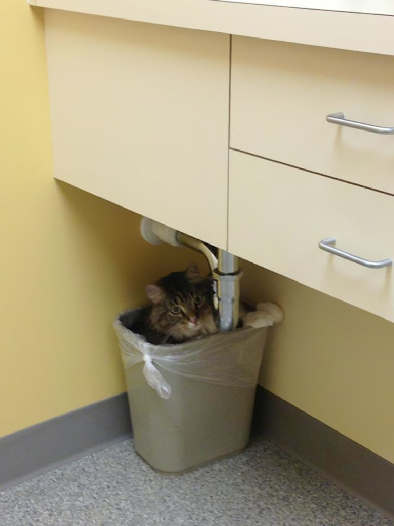 cats-going-to-the-vet-5