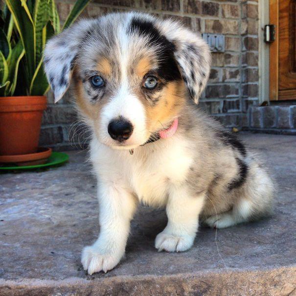 cute-dogs-1