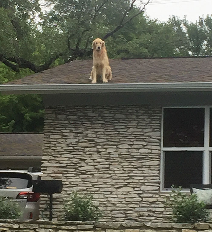 dog-on-rooftop-1