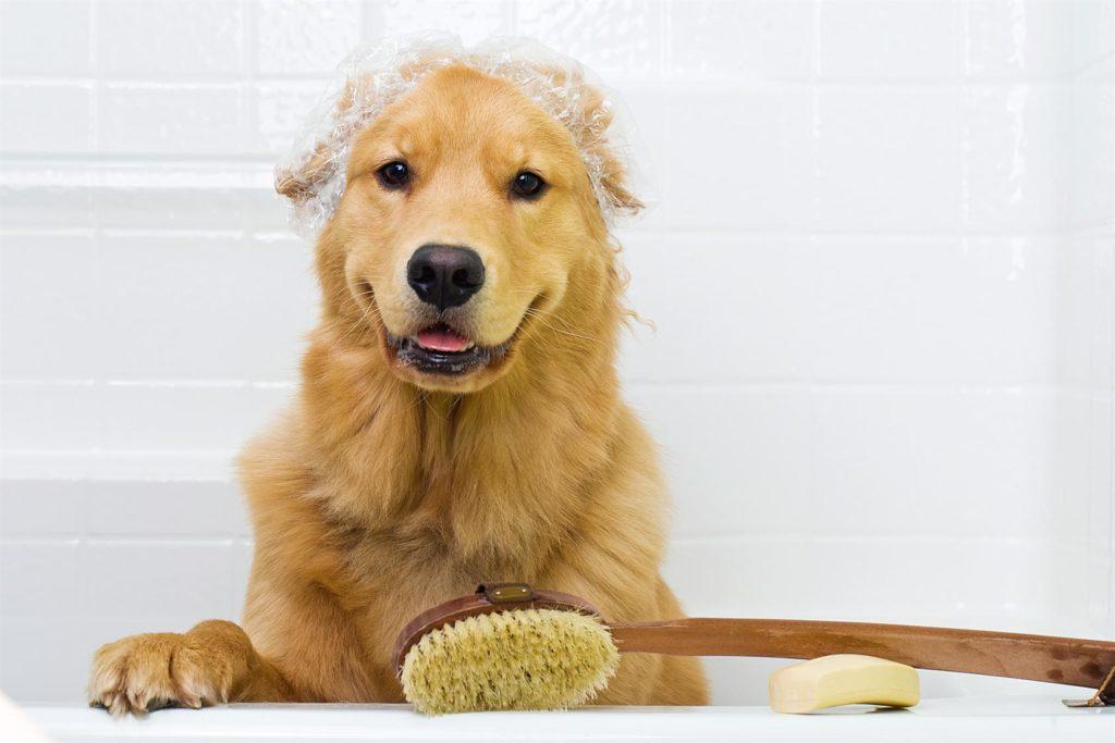 bath-dog