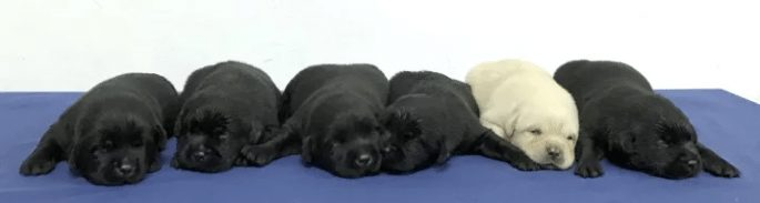 cute-puppies-1