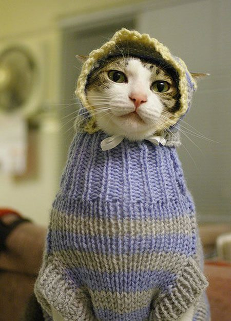 funny-animal-clothes-1