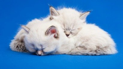 sleppy-cats-1