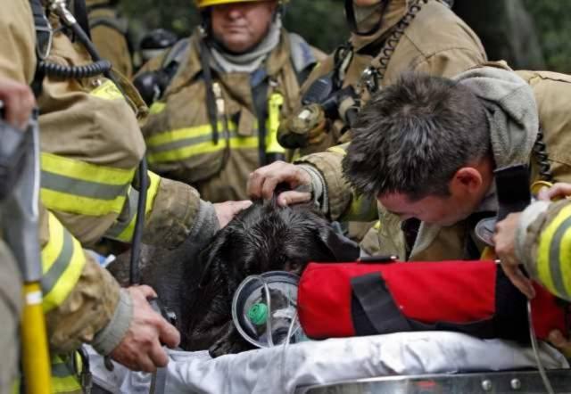 1-heartbreaking-pics-animals-saving-pets