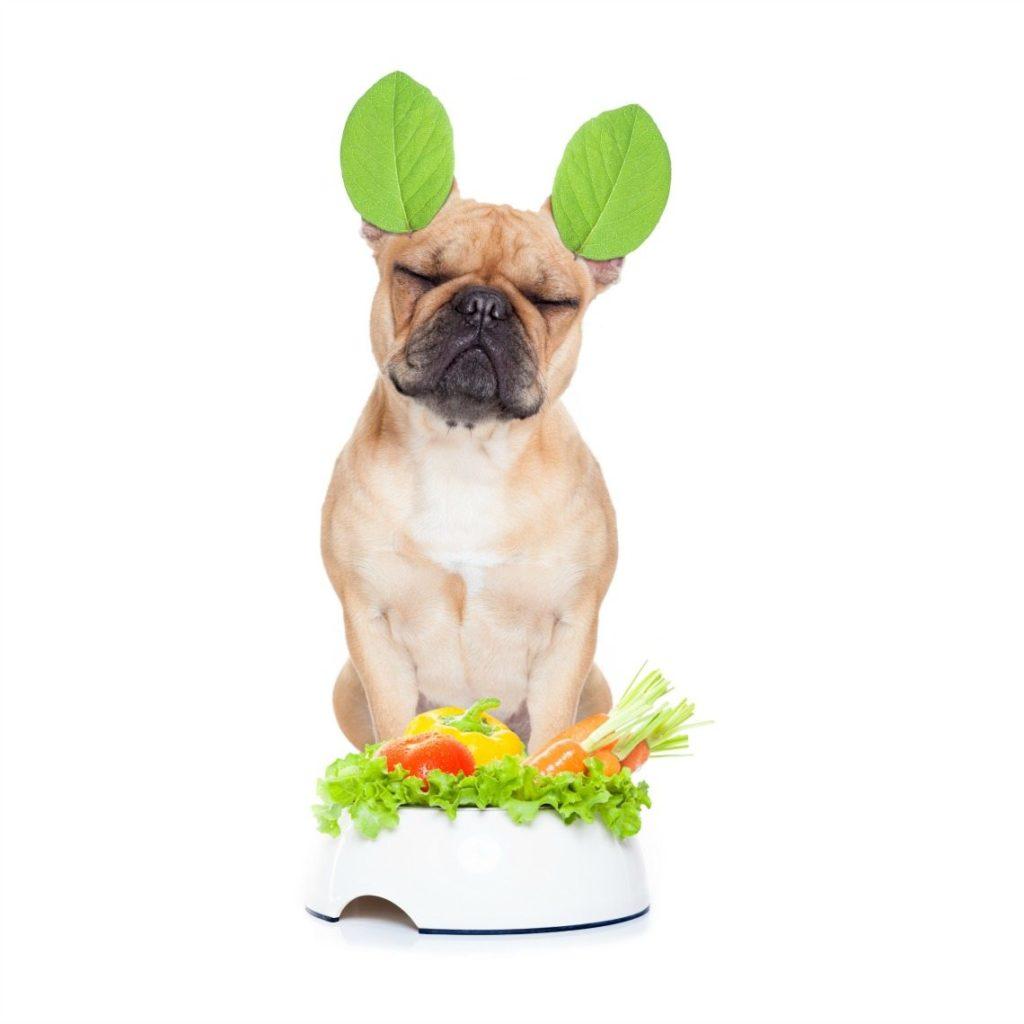 vegan-dog