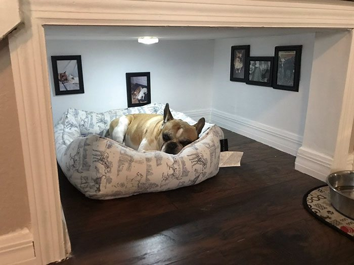 dog-bedroom-1