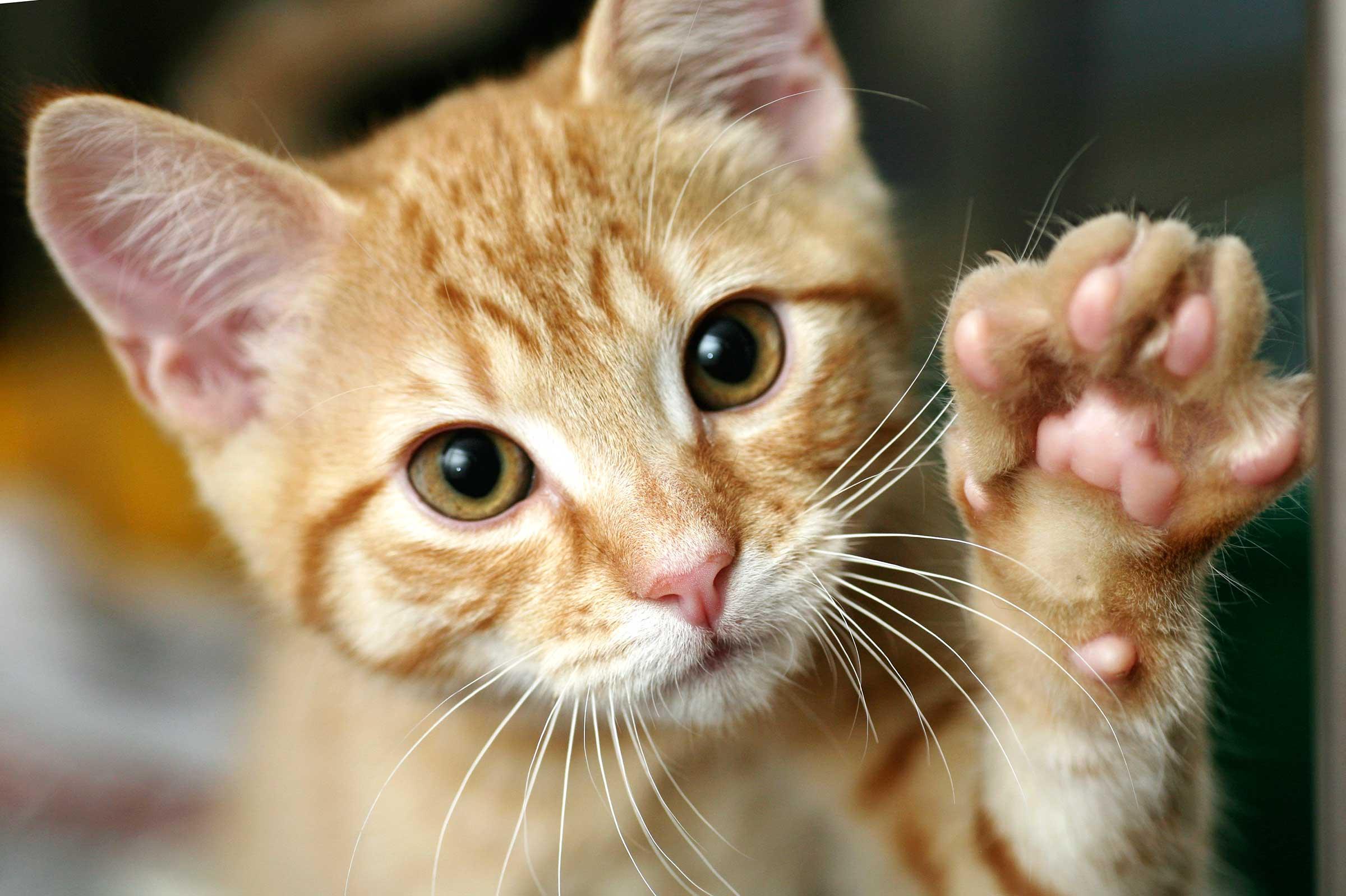 feline-facts-1