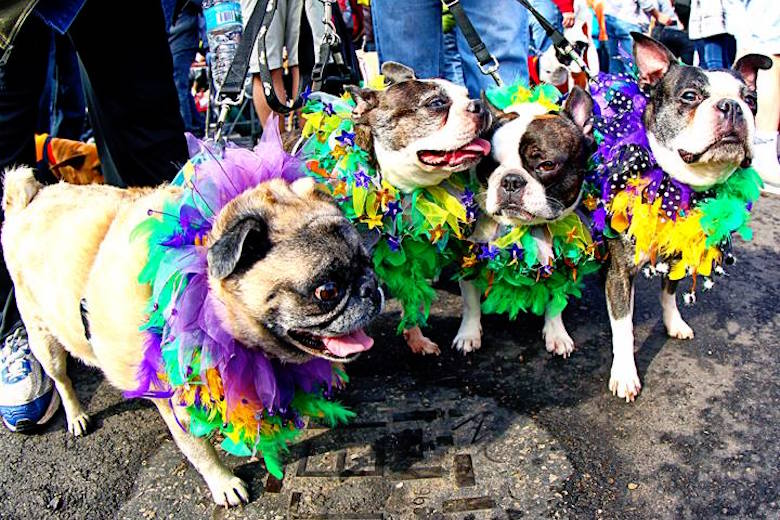 1-top-10-best-cities-america-for-your-pets